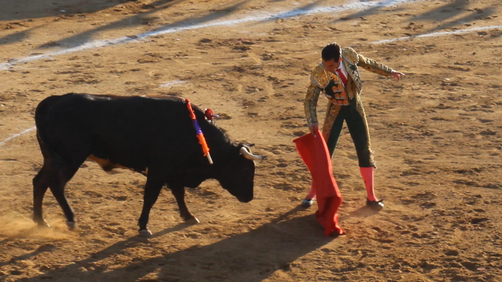 bull fighting 1920x1080 hd - photo #2